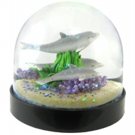 Waterglobe. Black Base. Dolphin.